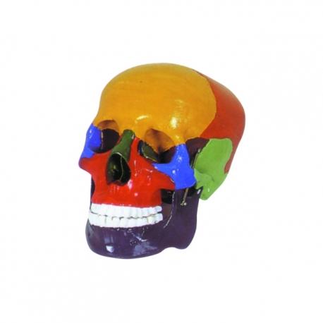 Farebná lebka človeka