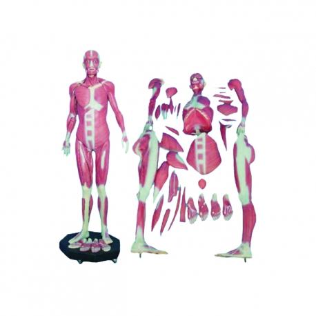 Ľudské telo (skladačka 34ks)