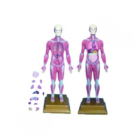 Model ľudského tela, (skladačka 13ks)