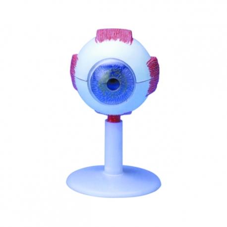 Model ľudského oka
