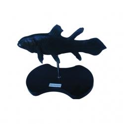 Paleozoic tropická ryba