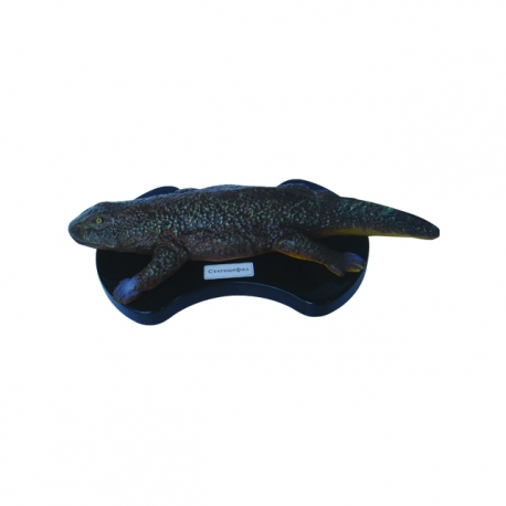 Paleozoic cayman