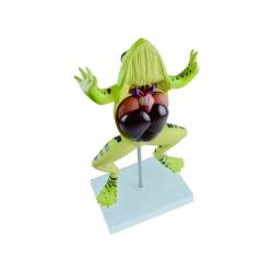 Pitevný model žaby