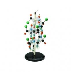 Proteinová štruktúra
