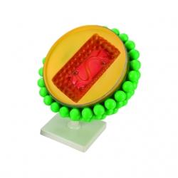 Model AIDS vírus