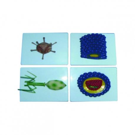 Model typických vírusov