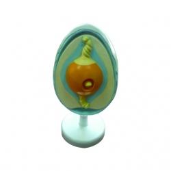 Model vajíčka